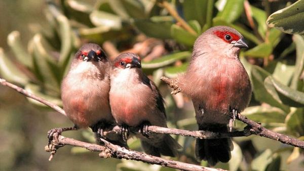 3 Birds - Jose Rocha / Wikimedia Commons/ Lizenz: CC BY 2.0